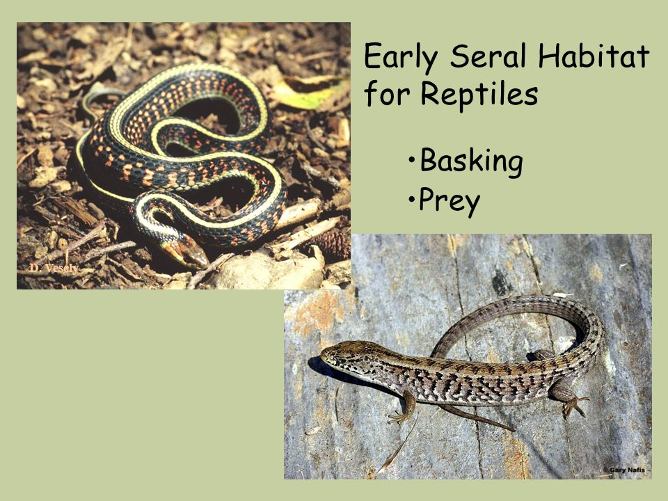 Early Seral Habitat for Reptiles