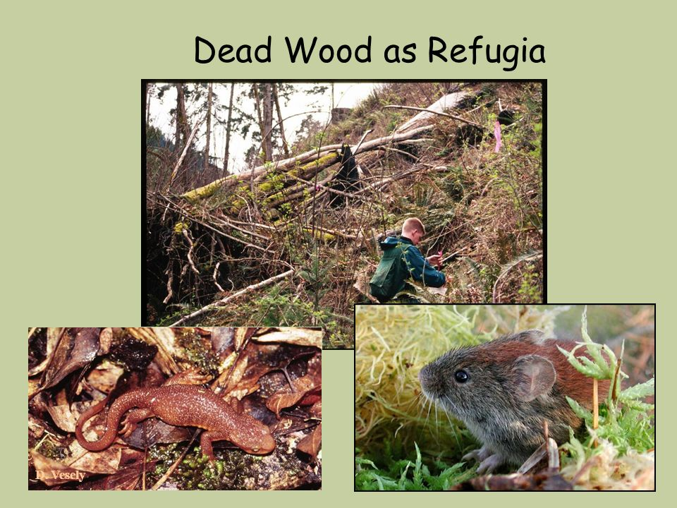 Dead Wood as Refugia D. Vesely