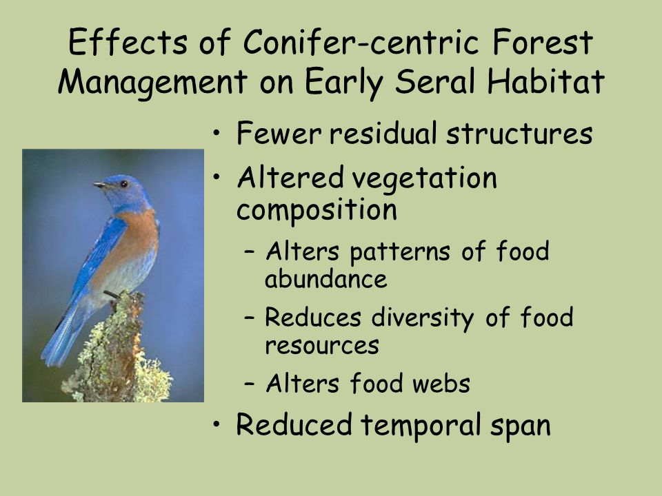 Effects of Conifer-centric Forest Management on Early Seral Habitat