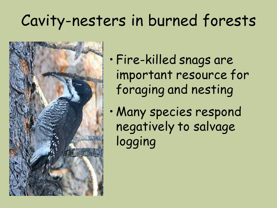 Cavity-nesters in burned forests