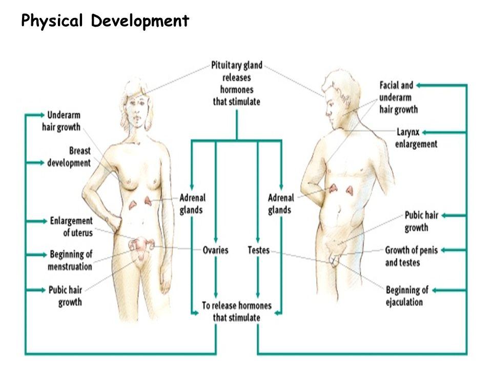 5 Physical Development