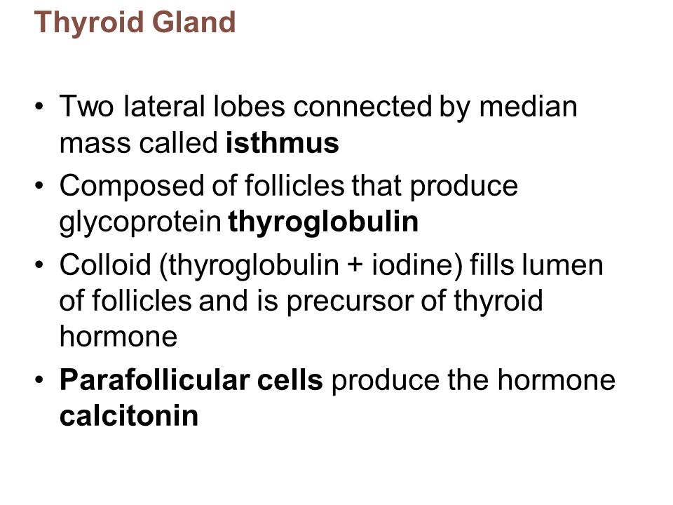Gross Anatomy Of Thyroid Gland Ppt Download