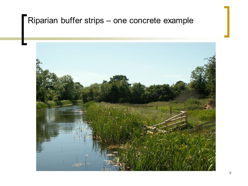 Riparian buffer strips – one concrete example
