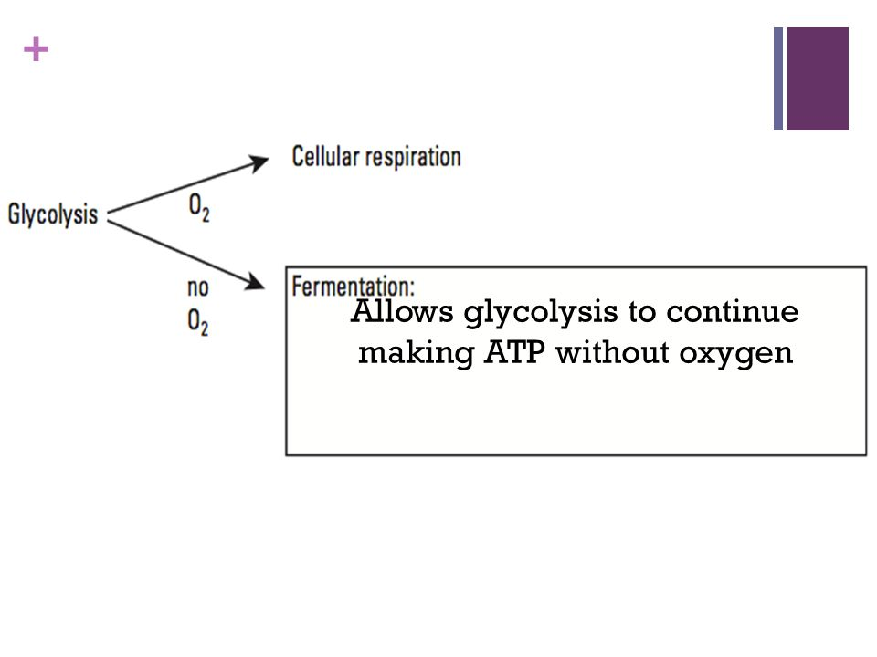 Allows glycolysis to continue making ATP without oxygen