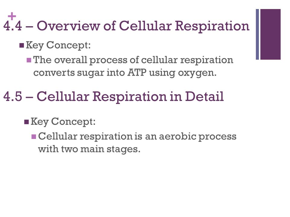 4.4 – Overview of Cellular Respiration