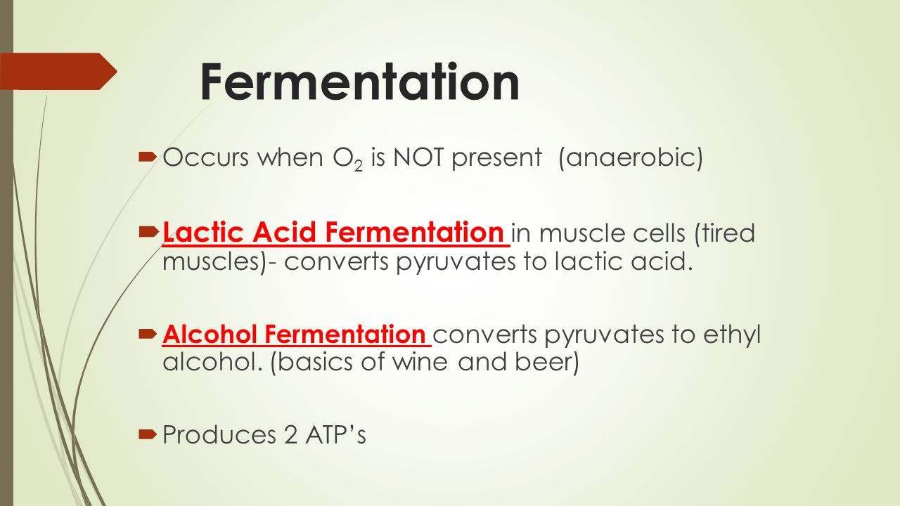 Fermentation Occurs when O2 is NOT present (anaerobic)