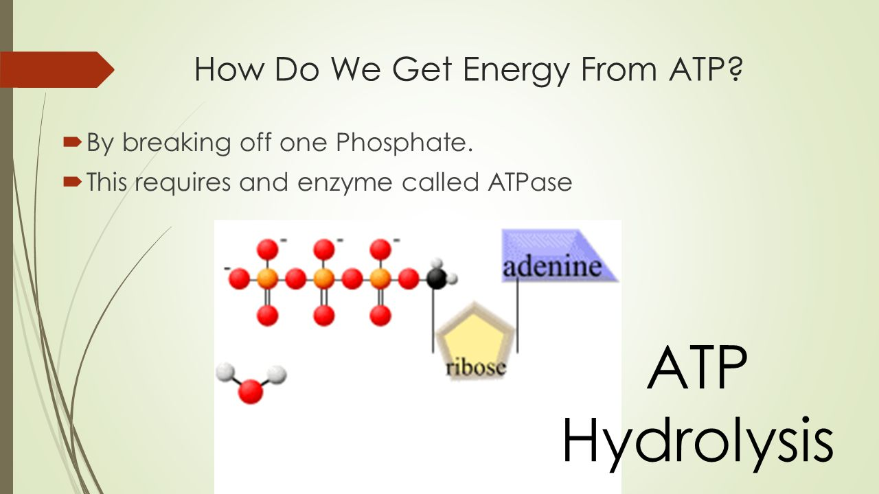 How Do We Get Energy From ATP