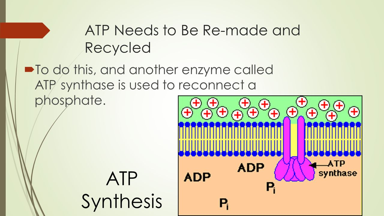 ATP Needs to Be Re-made and Recycled