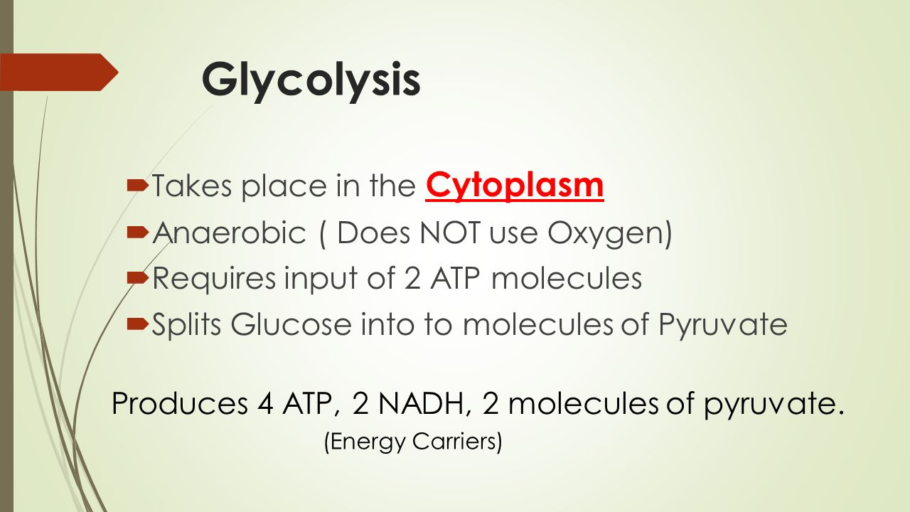 Glycolysis Takes place in the Cytoplasm