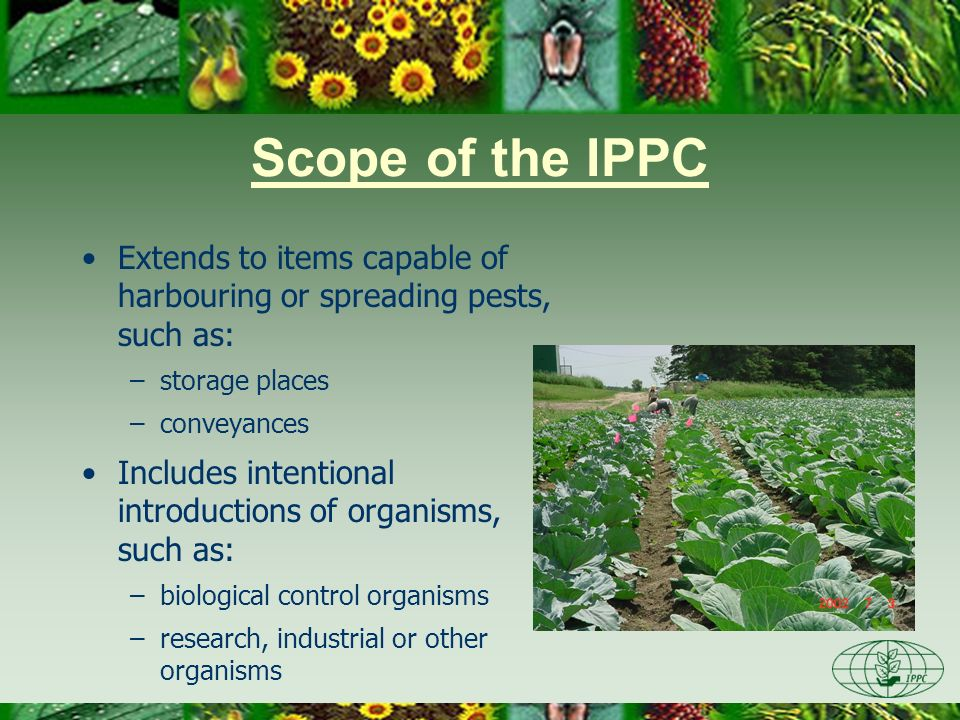 Day One 3/28/2017. Scope of the IPPC. Extends to items capable of harbouring or spreading pests, such as: