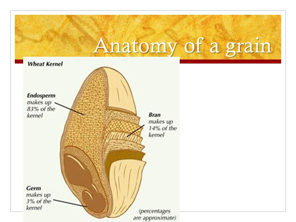 93% of Americans fail to consume ½ cup of whole grains per day ...