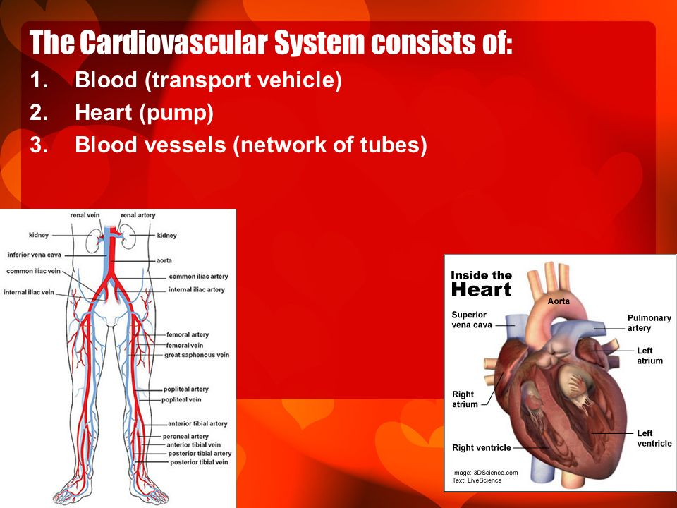 Cardiovascular System Ppt Download