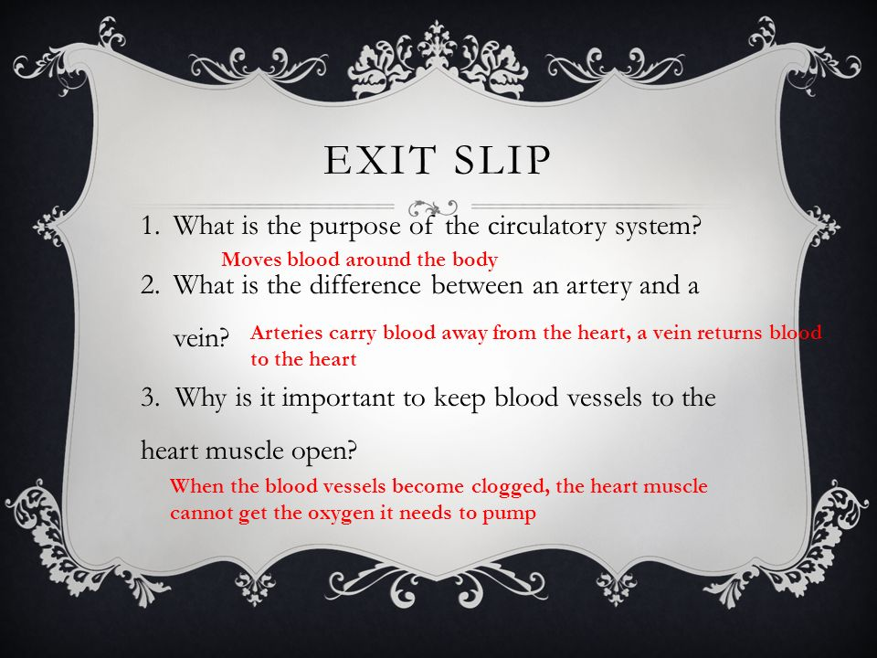 Exit slip What is the purpose of the circulatory system
