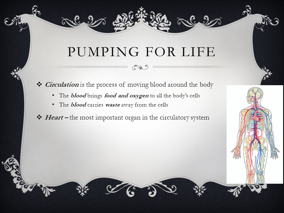 pumping for life Circulation is the process of moving blood around the body. The blood brings food and oxygen to all the body's cells.