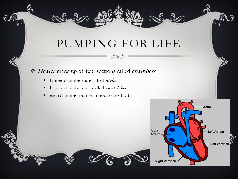 pumping for life Heart: made up of four sections called chambers