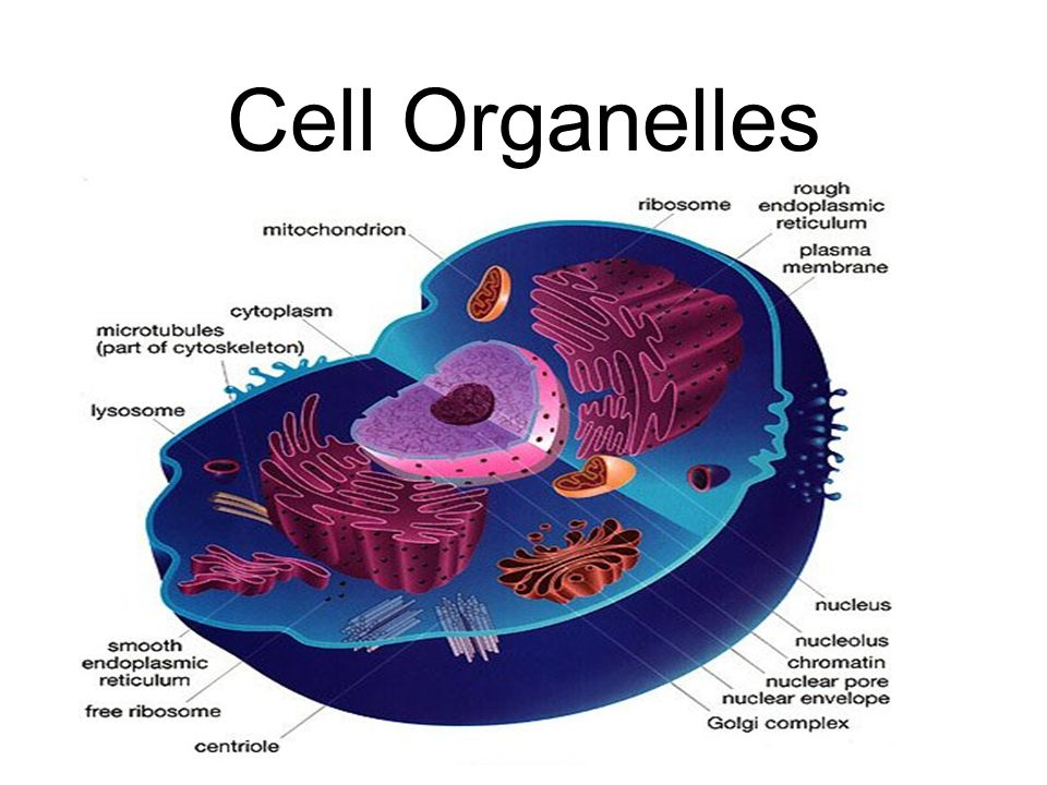 Idetify Part Of A Plant Cell Video Kids