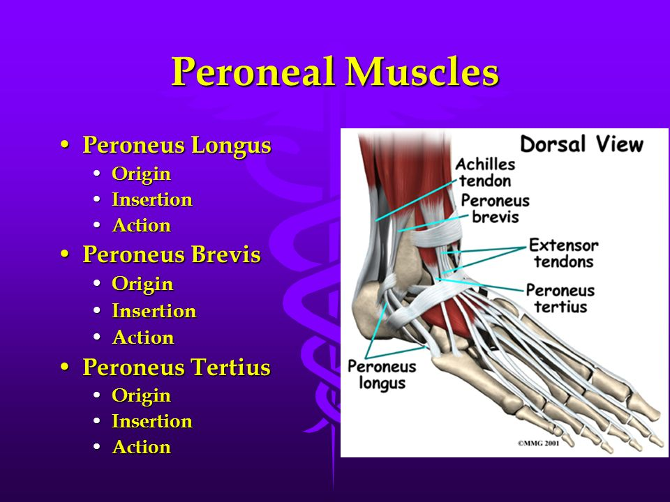 Chapter 8 Foot And Ankle Ppt Video Online Download