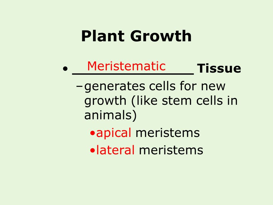 Plant Growth Meristematic ______________ Tissue
