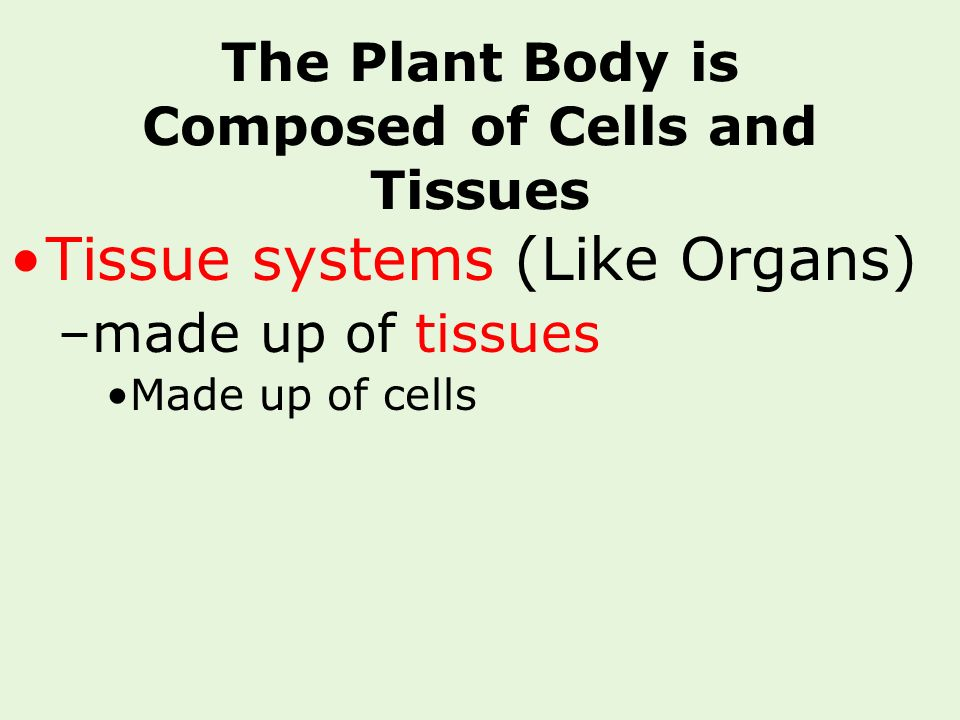 The Plant Body is Composed of Cells and Tissues