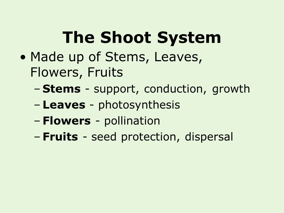 The Shoot System Made up of Stems, Leaves, Flowers, Fruits