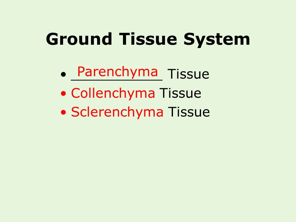 Ground Tissue System Parenchyma ___________ Tissue Collenchyma Tissue