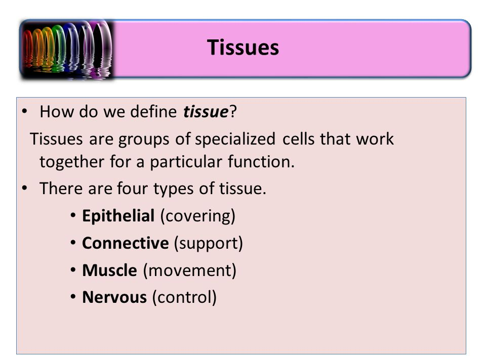 Animal Histology Cells Tissues Ppt Download