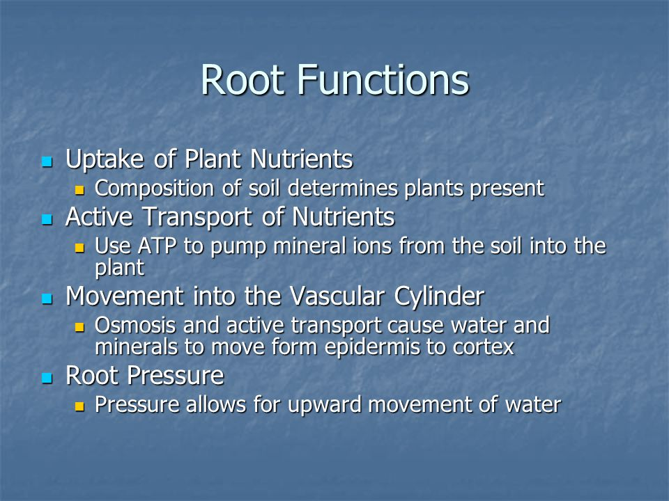 Root Functions Uptake of Plant Nutrients Active Transport of Nutrients