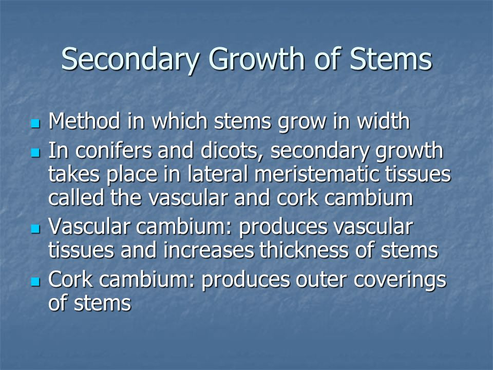 Secondary Growth of Stems