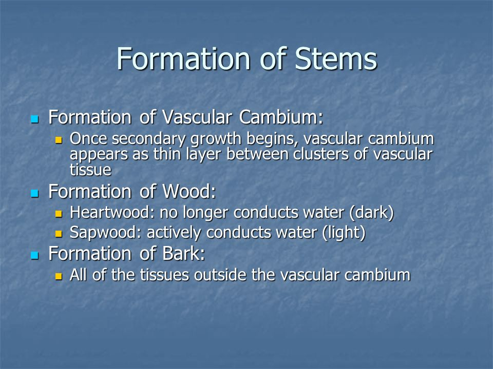 Formation of Stems Formation of Vascular Cambium: Formation of Wood: