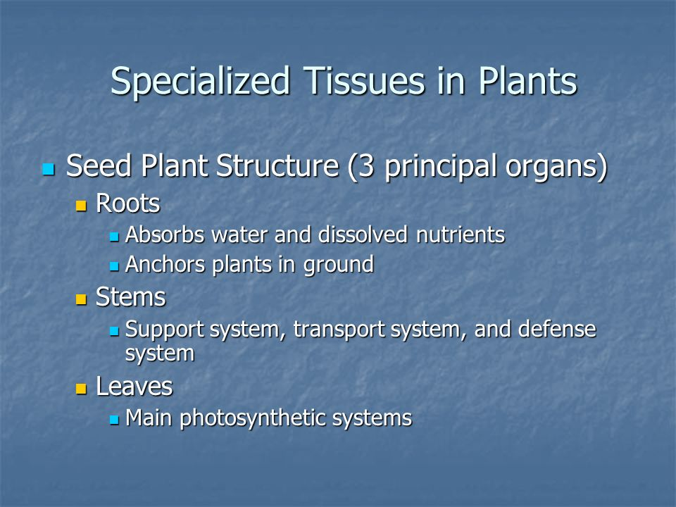 Specialized Tissues in Plants