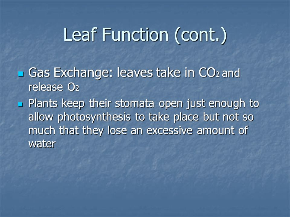 Leaf Function (cont.) Gas Exchange: leaves take in CO2 and release O2
