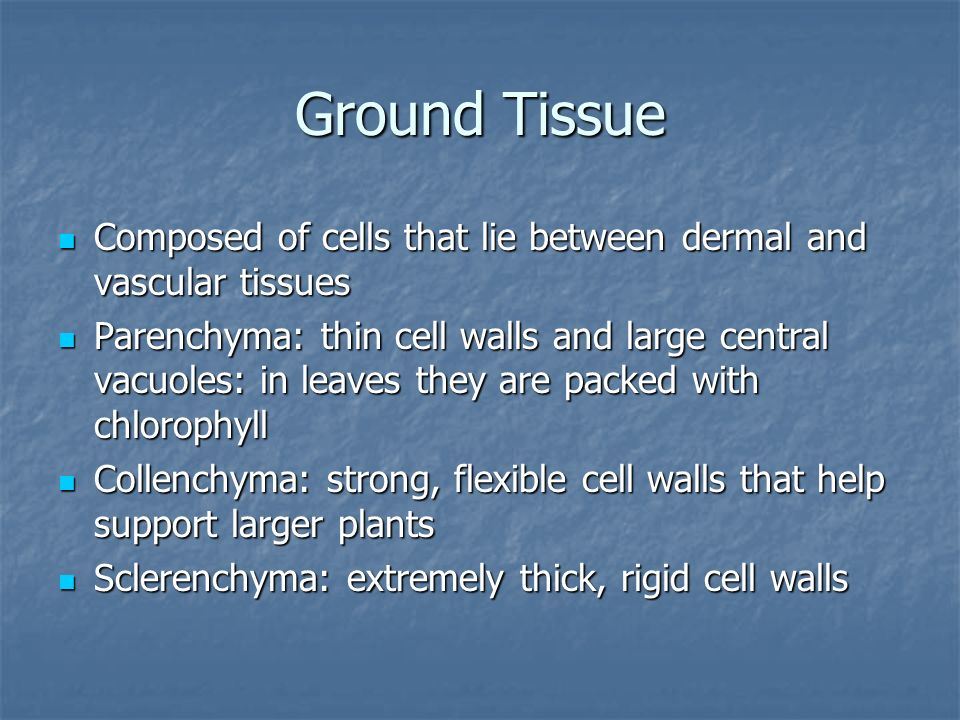 Ground Tissue Composed of cells that lie between dermal and vascular tissues.