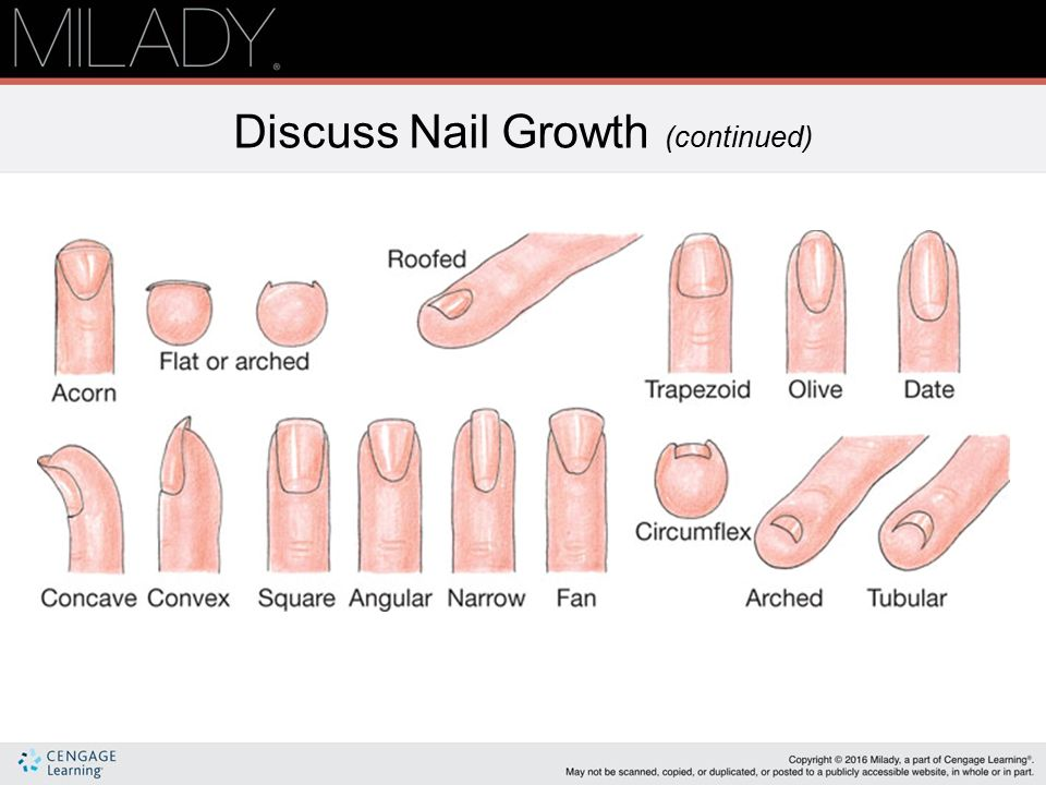 Nail Structure Growth Ppt