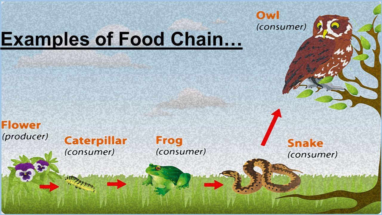 How Do You Make A Food Chain