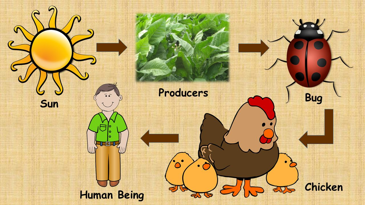 Producers Make Up The What Of The Food Chain