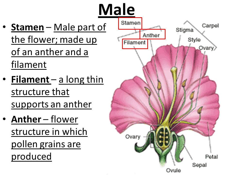 Structure Of Flowers P Ppt Video Online Download