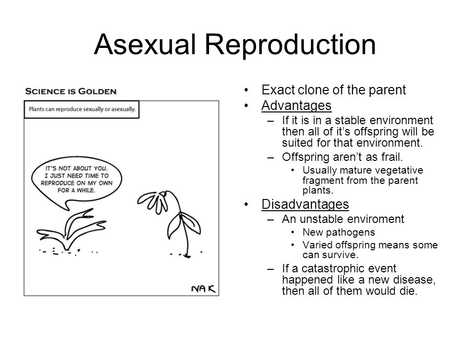 Why is the offspring of asexual reproduction a clone pic 29