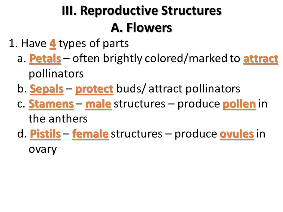 III. Reproductive Structures
