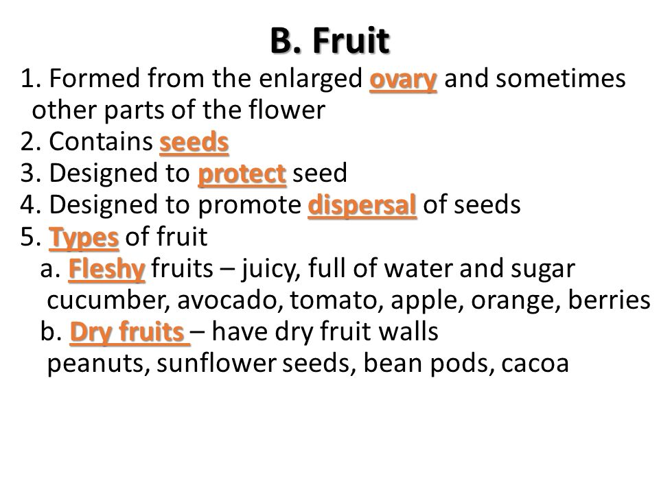 B. Fruit 1. Formed from the enlarged ovary and sometimes other parts of the flower. 2. Contains seeds.