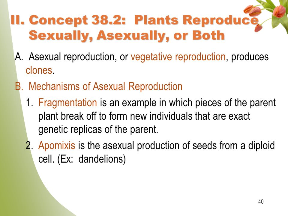 Apomixis asexual reproduction