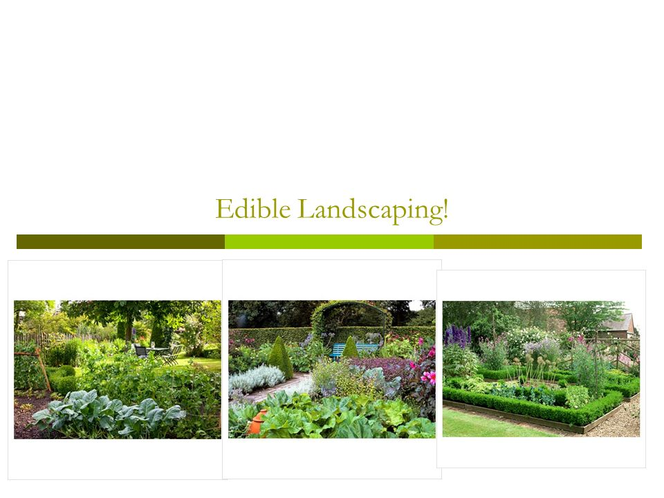 edible landscaping ppt download