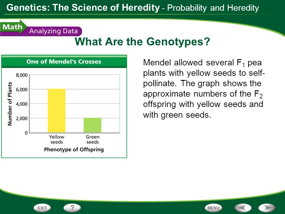What Are the Genotypes - Probability and Heredity