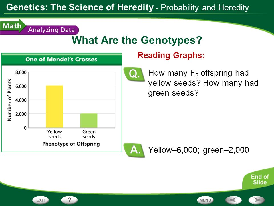 What Are the Genotypes - Probability and Heredity Reading Graphs: