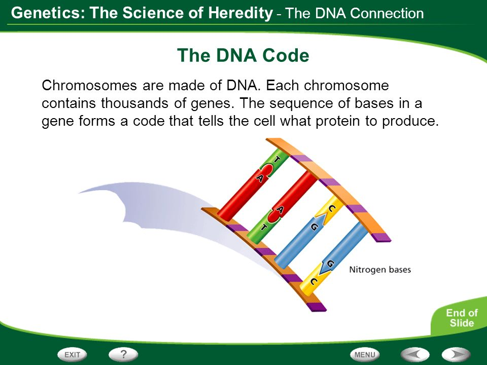 The DNA Code - The DNA Connection