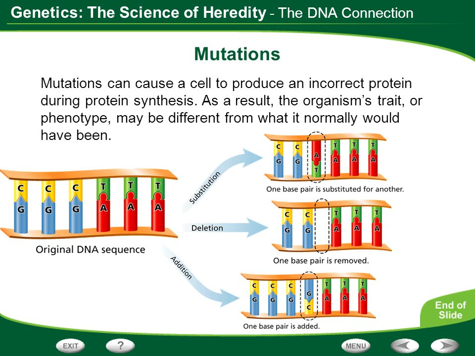 Mutations - The DNA Connection