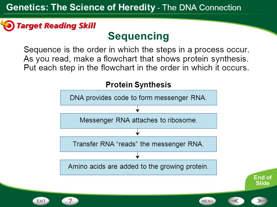 Sequencing - The DNA Connection