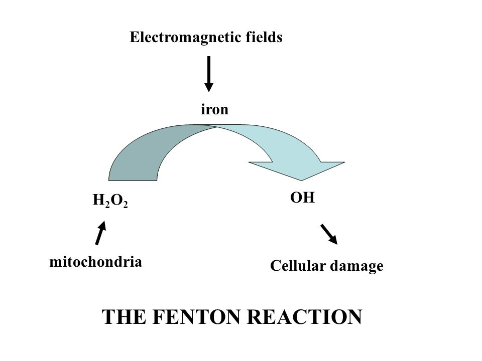 THE FENTON REACTION Electromagnetic fields iron OH H2O2 mitochondria