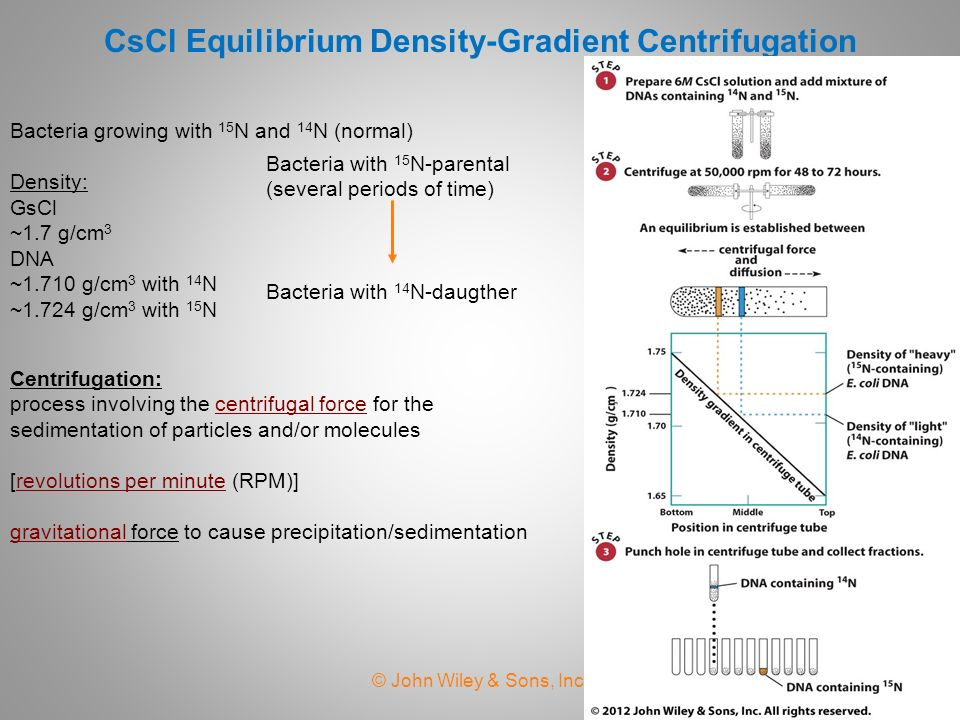 equilibrium density gradient centrifugation
