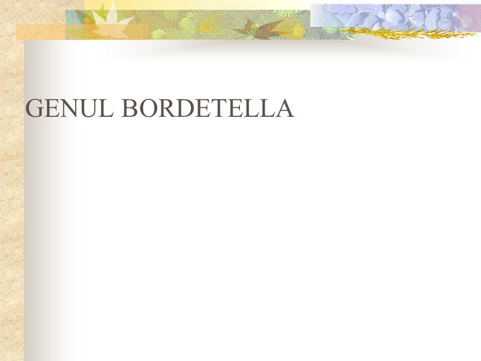GENUL BORDETELLA