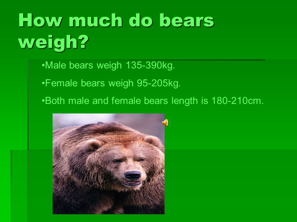 How much does the bear weigh